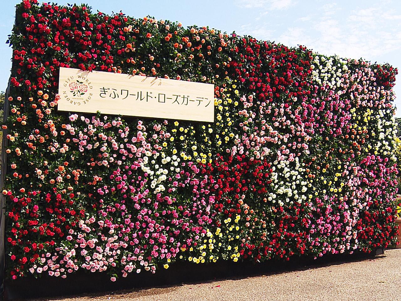 岐阜県可児市の「花フェスタ記念公園」が9日、「ぎふワールド・ローズガーデン」と名...