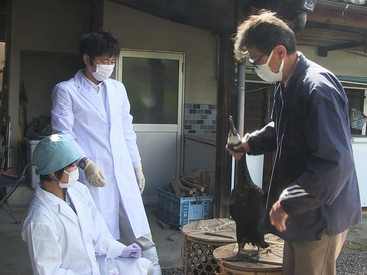岐阜県関市の小瀬鵜飼で、5月の開幕を前に22日、鵜の検診が行われました。 鵜の検...