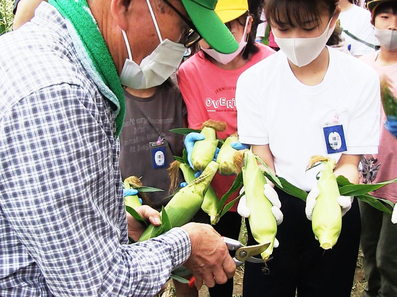 地元の野菜について理解を深めてもらおうと岐阜市で14日、小学生がトウモロコシの収...
