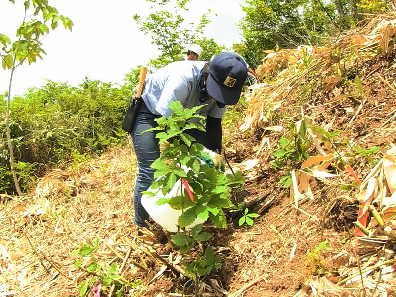 岐阜県高山市の老舗家具メーカー「飛騨産業」は、県や市と協定を結んで森林づくりを進...