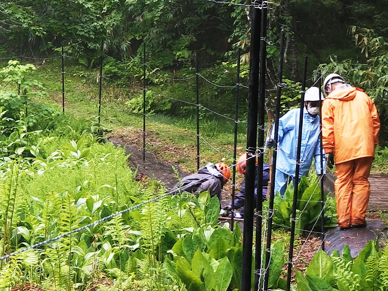 岐阜県高山市荘川町の湿原にある県の天然記念物「山中峠のミズバショウ群落」で、ミズ...