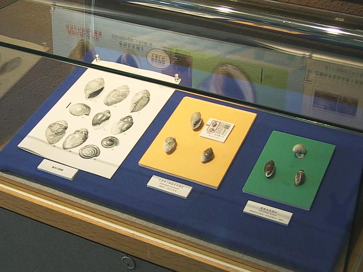 岐阜県瑞浪市の地層から発掘された貝の化石が、巻き貝「オカミミガイ」に属する新種で...