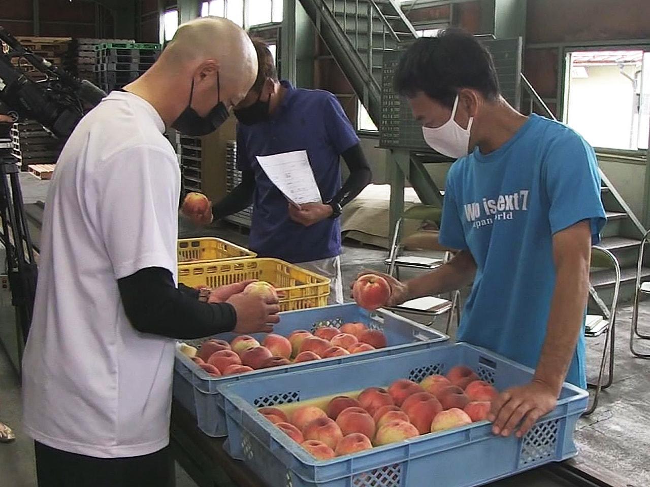 飛騨産の桃「白鳳」の出荷が8月から始まるのを前に、出荷基準を確認する「目揃え会」...